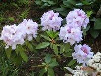 Flower_thumb.JPG