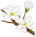 flower_kobushi.png